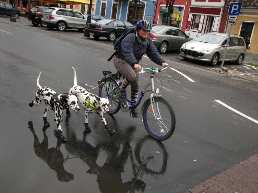 Dogs With Bike